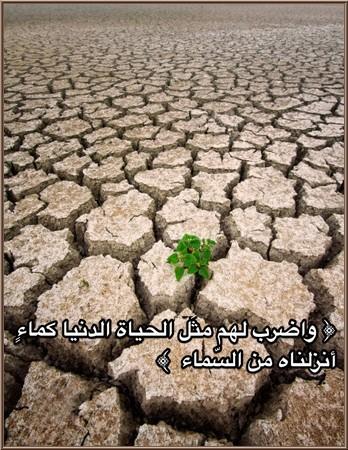 Read more about the article Allâh a comparé le bas-monde avec l'eau…